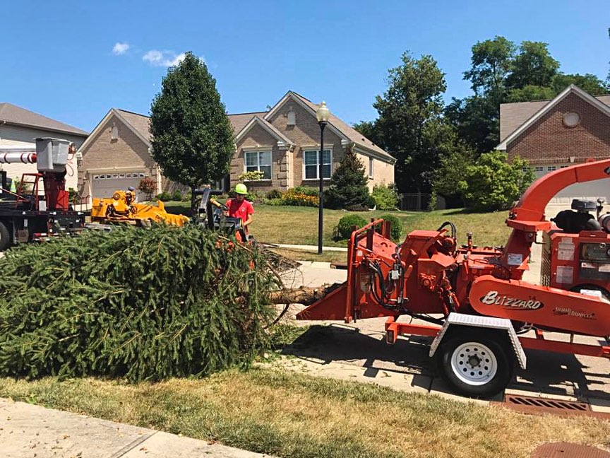 Learn More About Tree Services In Denver Colorado